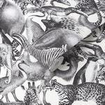 Kingdom Zebra Wallpaper