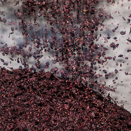 etude red wine grapes being poured into the fermentation tank