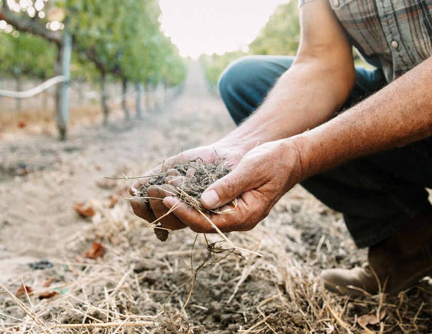 soil from the estate vineyard in carneros