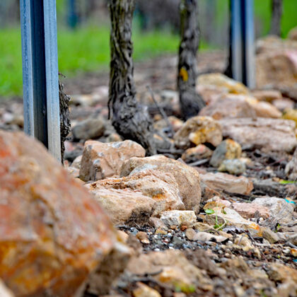 rocky soil features at etude estate vineyard