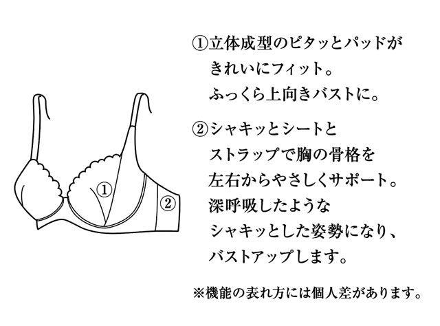 姿勢キレイをサポートするシャキッとブラ 機能説明