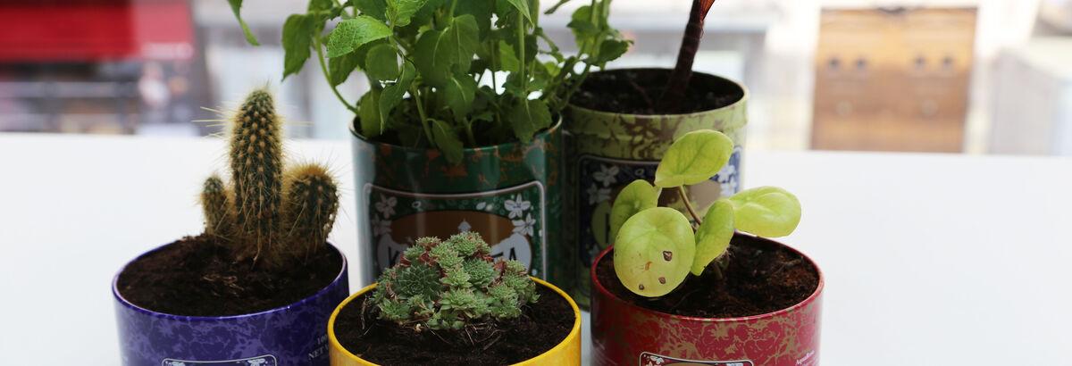 Recyclez votre boîte Kusmi en un pot végétal