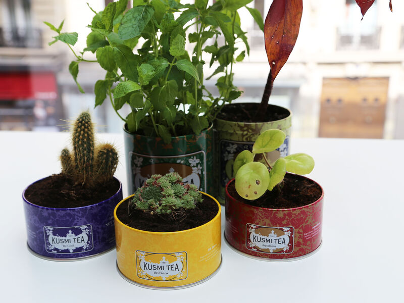 Recycle your Kusmi tin as a plant pot