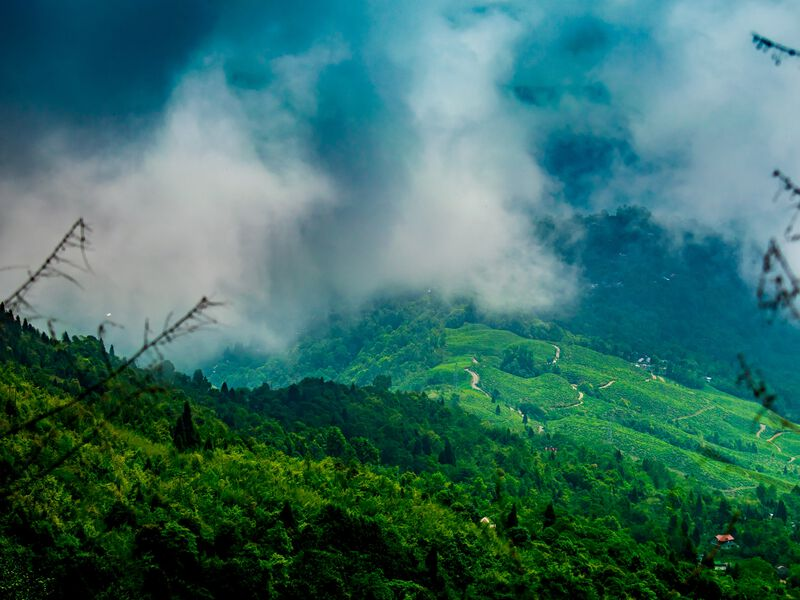 Le thé Darjeeling, un thé noir indien | Kusmi Tea