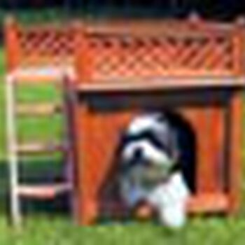 Room with a View Dog House