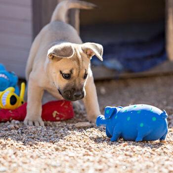 Multipet Globlet Latex Dog Toy