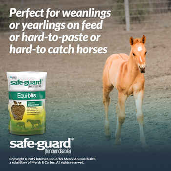 Safe-Guard Equi-Bits