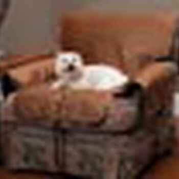 Solvit Sta-Put Full-Coverage Pet Chair Protector