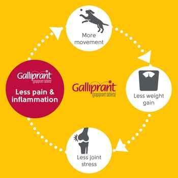 Galliprant
