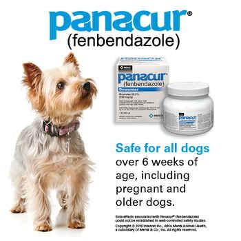 Panacur C Canine Dewormer